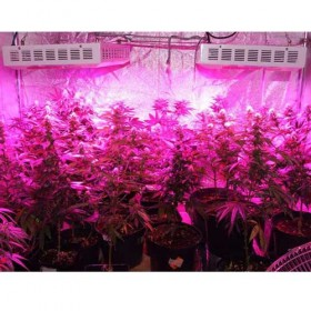 Full Spectrum 300W LED Grow Light For Medicinal Marijuana Plants -1