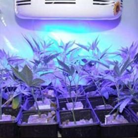 All Blue LED Grow Light For Grow Plants -1