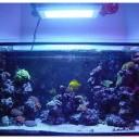 Hot Sale 120w LED Aquarium Lights Bulbs For Aquarium Supplies -1