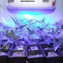 All Blue LED Grow Light For Grow Plants -1