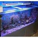 165W LED Aquarium Lights For Fish Tank Hot Sale New Zealand -1
