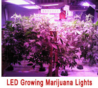 led grow light new zealand